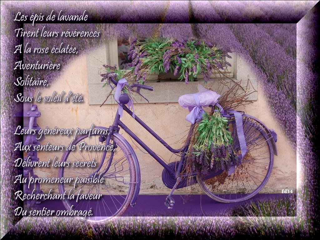 Petite Balade En Provence Pays De La Lavande